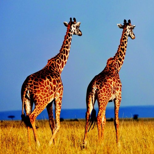 Onbekend Kenia