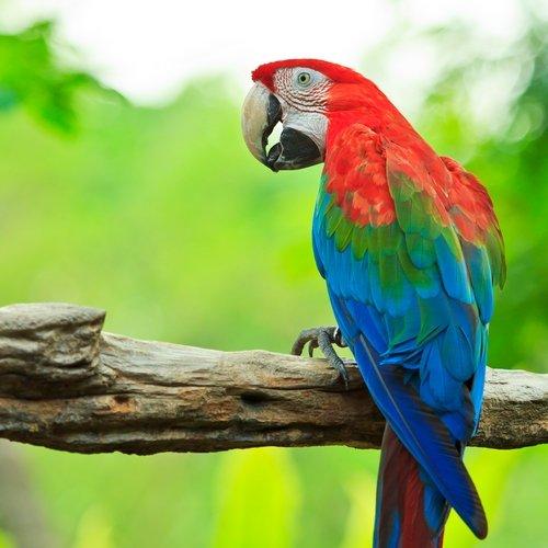 NRV: Natuurlijke Schoonheid van Costa Rica per 4WD