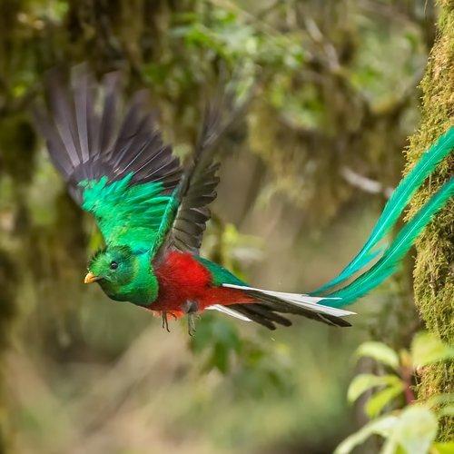 NRV: Paradijselijk Costa Rica per 4WD