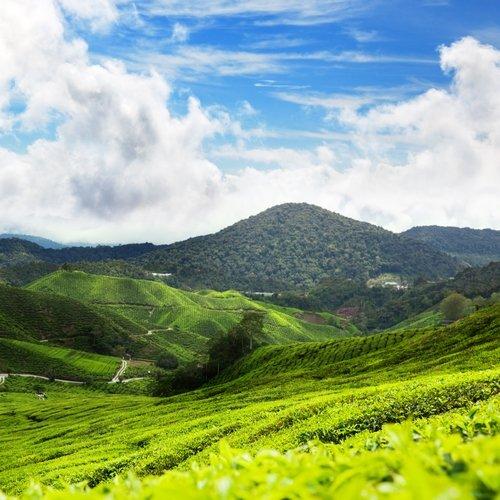 NRV: Kennismaking met Maleisië, incl. chauffeur