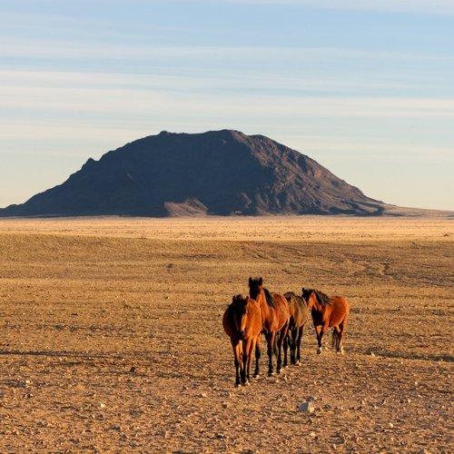 NRV: 't Andere Namibië