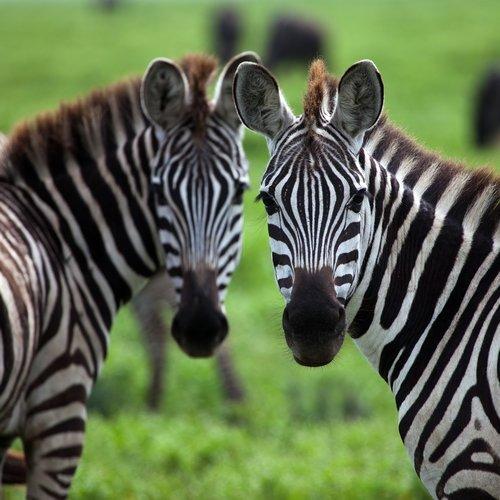 Safari & De Kaap