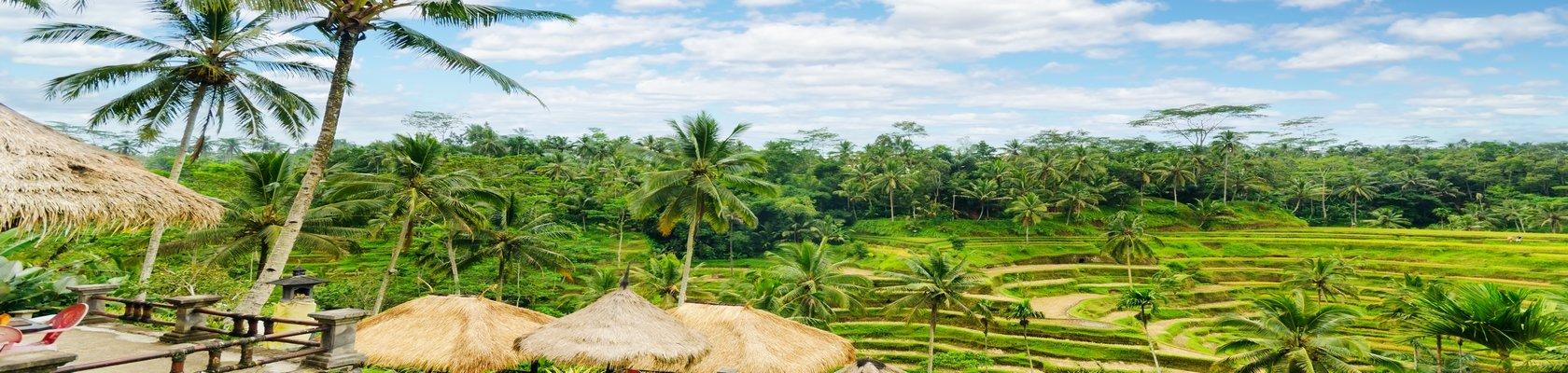 Uitgestrekte plantages en rijstvelden
