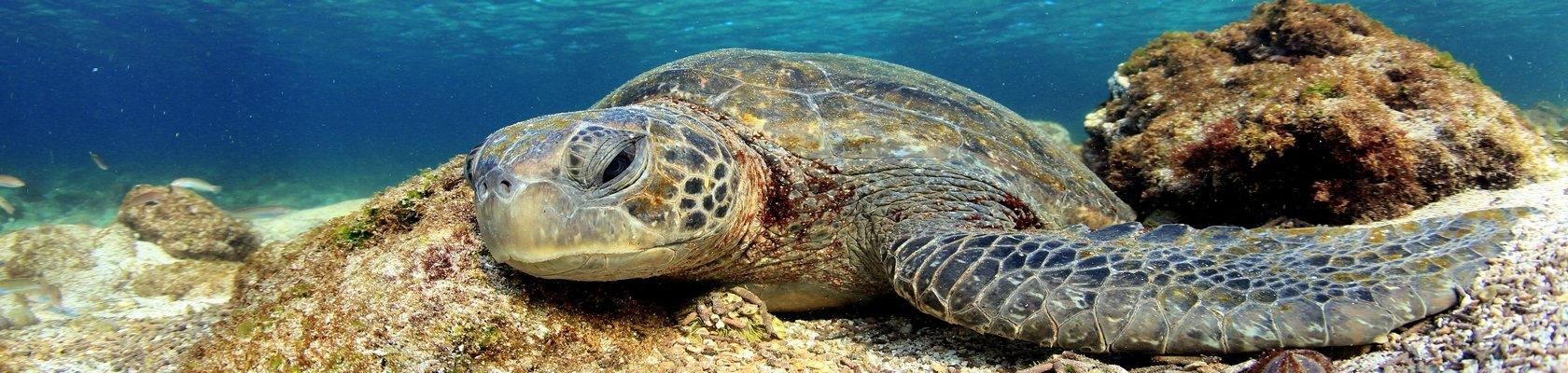 Eilandhoppen op de Galápagos