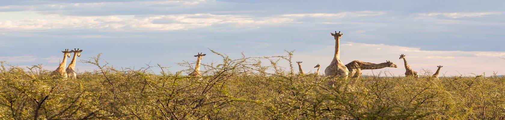 Op safari in Etosha Nationaal Park