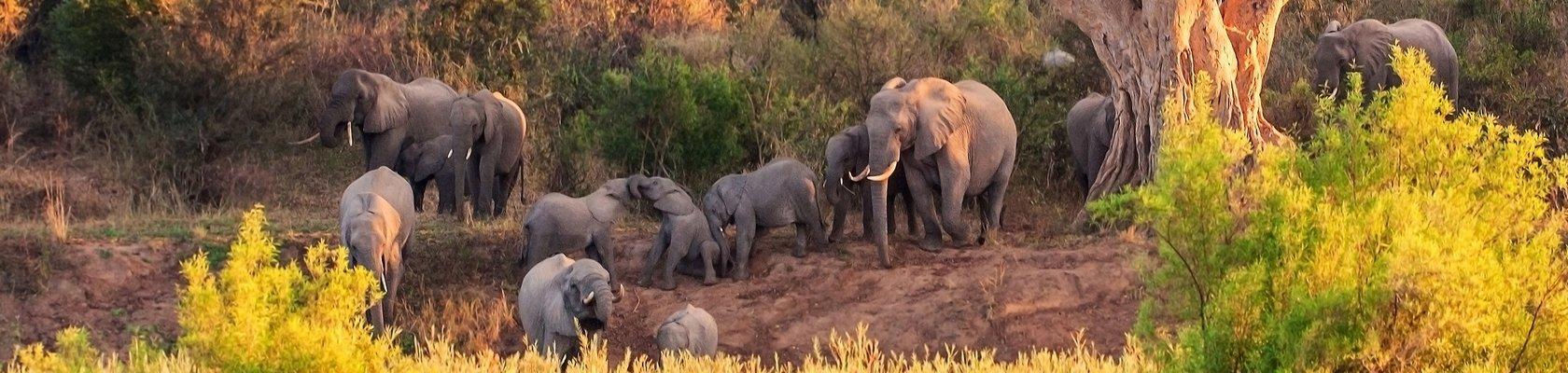 Op safari in het Krugerpark