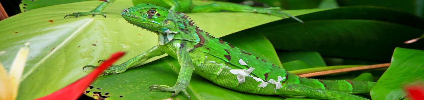 Tortuguero Nationaal Park