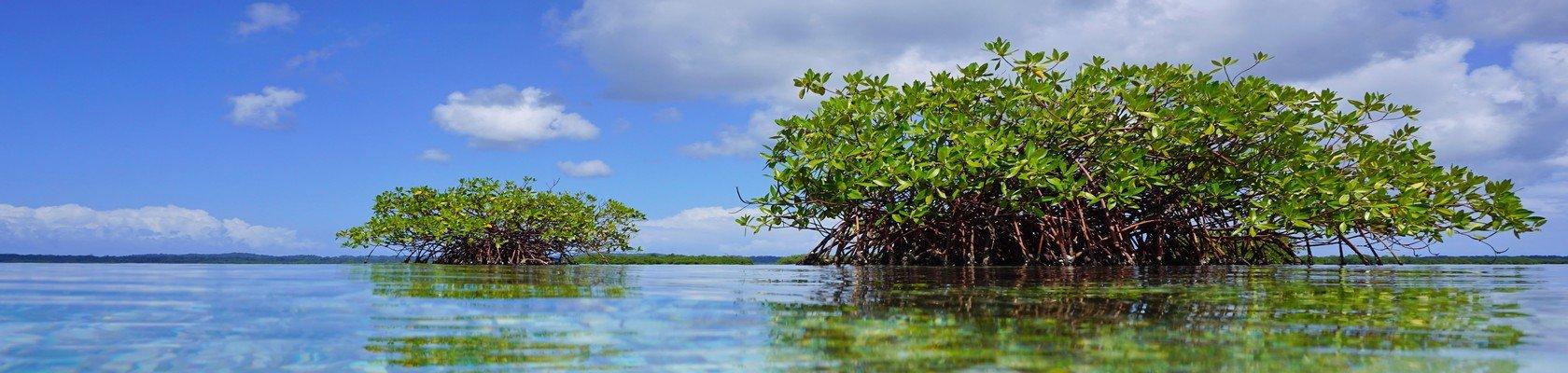 Mangrove tocht Damai en op zoek naar dolfijnen