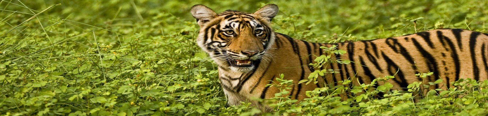 Ranthambhore Nationaal Park