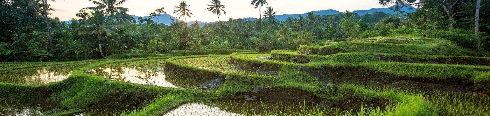 Jatiluwih Unesco Werelderfgoed