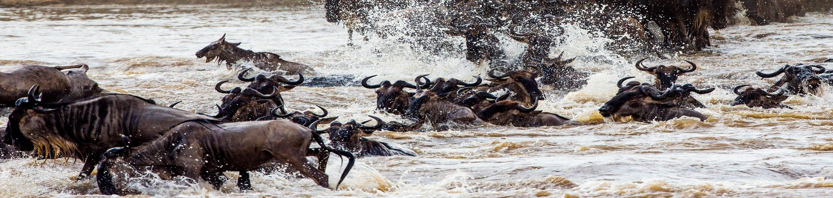Masai Mara nationaal park
