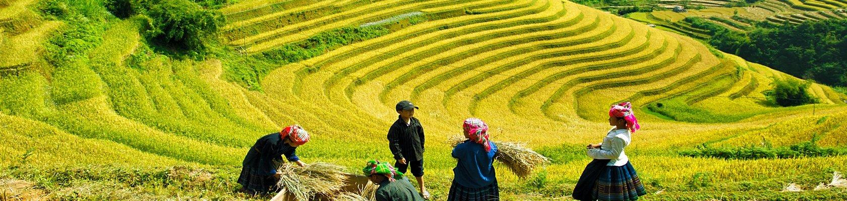 Hmong stammen