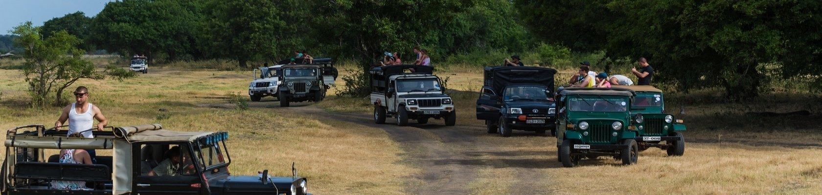 Safari Minneriya Nationaal park