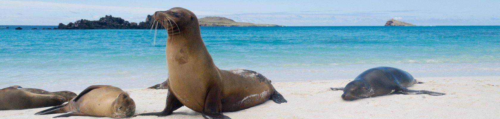 Galápagos-eilanden