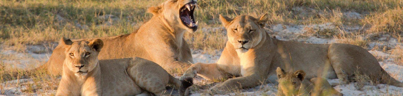Chobe nationaal park