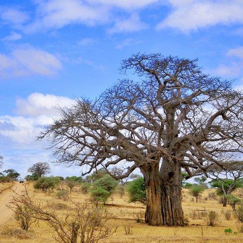 NRV: Het Beste van Tanzania & Zanzibar