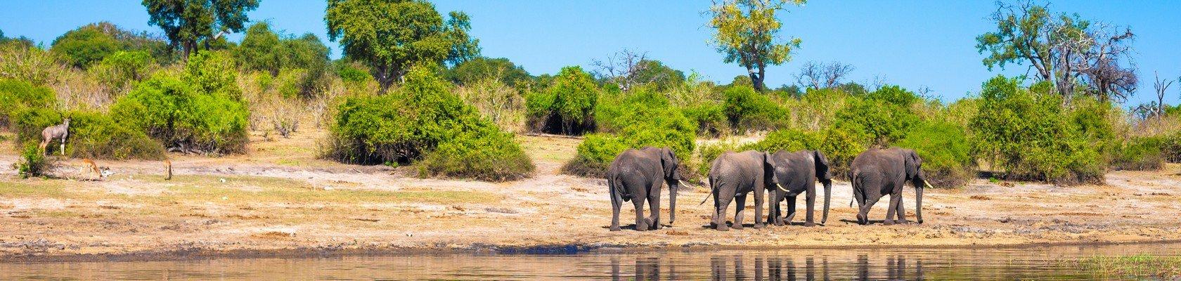 De olifant, onderdeel van de Big 5