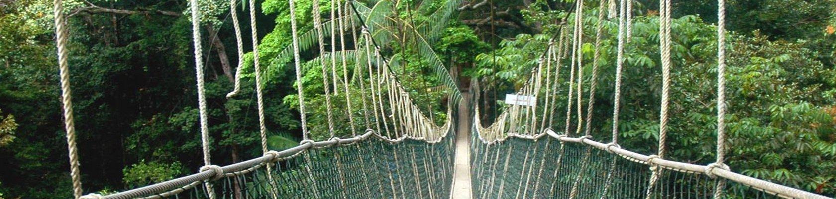 Canopy Walk - Taman Negara