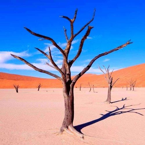 Hoogtepunten van Namibië