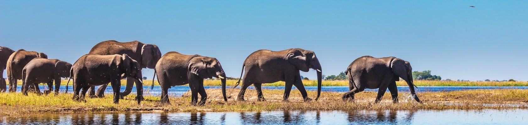 Olifanten in Chobe Nationaal Park