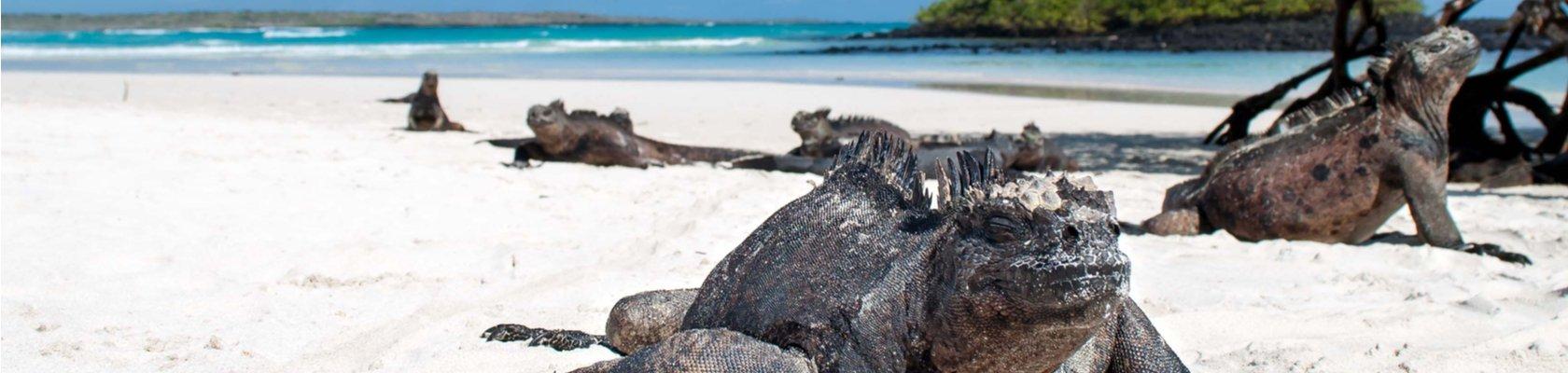Isabela (Galápagos)