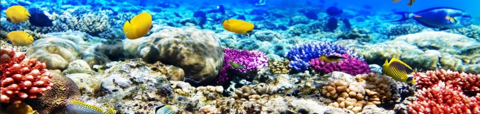 Onderwaterwereld, Rode Zee