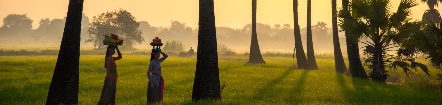 rijstvelden in Indonesië