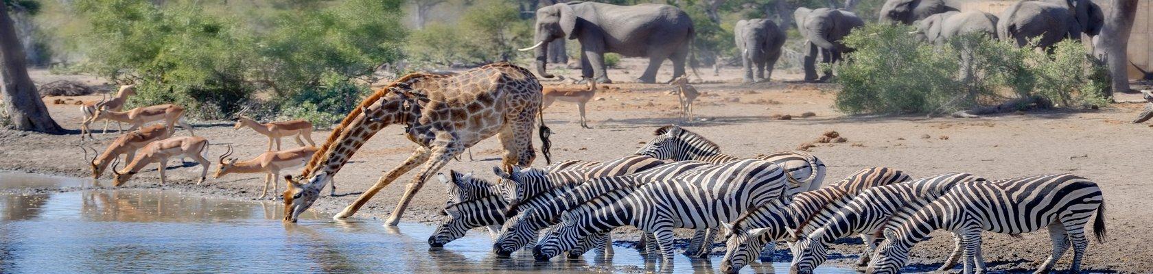 Wilde dieren in Kruger Nationaal Park
