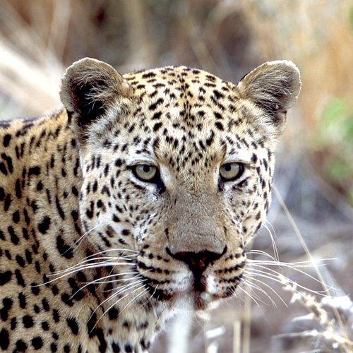 NRV: Beste van Namibië