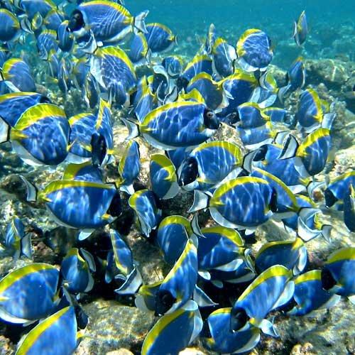 Vissen Malediven