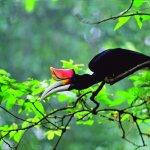 Exotische vogel