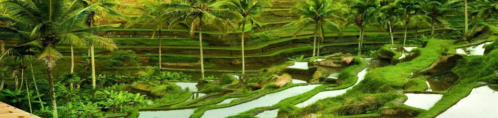 Prachtige treinreis door de rijstvelden