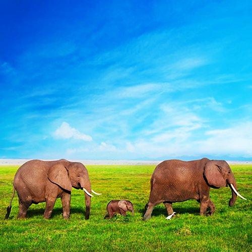 Relaxt Zuid-Afrika afbeelding