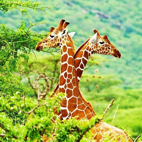 Wildparken van Zuid-Afrika