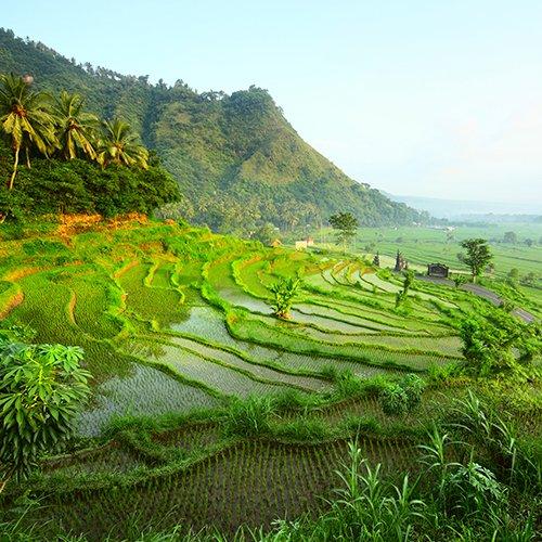 Relaxt door Java & Bali