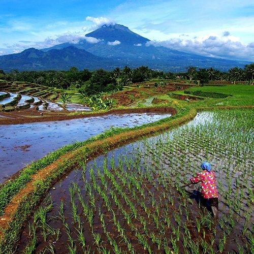 NRV: Java, Bali, Gili & Lombok