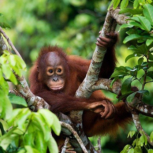 NRV: Maleisië & Borneo