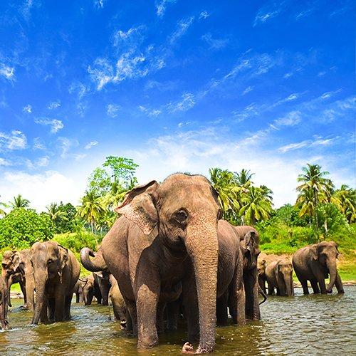 Beste van Sri Lanka