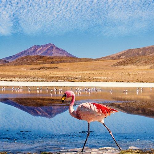 NRV: Het Beste van Peru & Bolivia