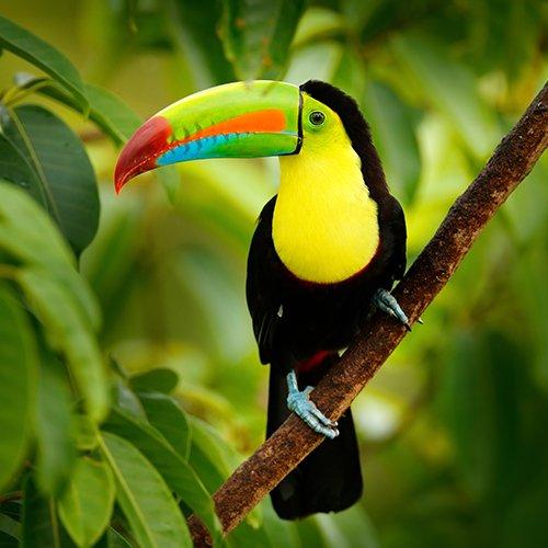 NRV: Hoogtepunten van Costa Rica