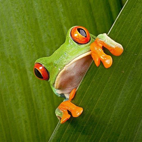 NRV: Hoogtepunten van Costa Rica per 4WD