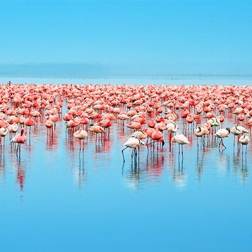 Safari Kenia & Tanzania (via Lake Victoria)