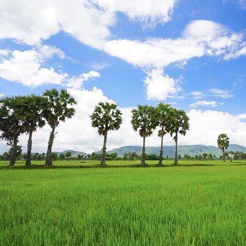 NRV: Vietnam & Cambodja