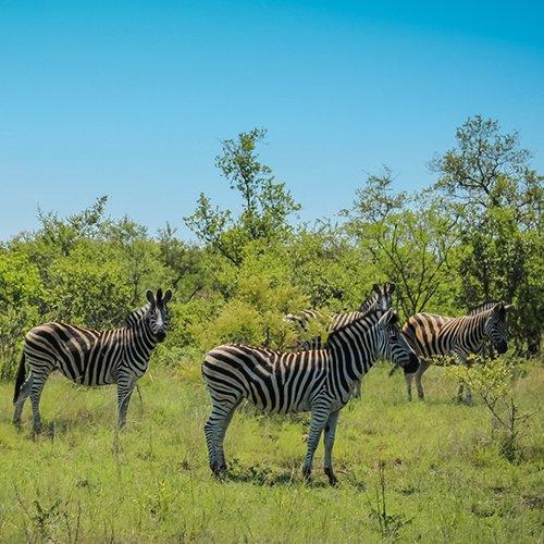 Krugerpark, Swaziland & Zululand