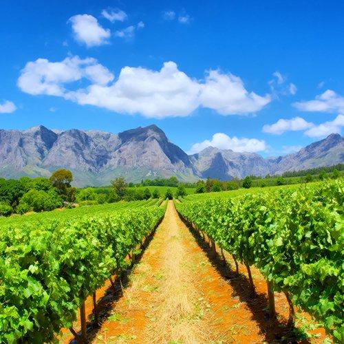 NRV: Beste van de Kaap