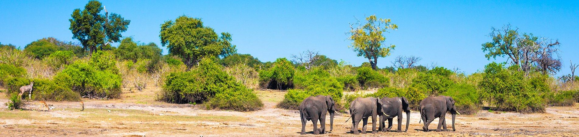 Krugerpark in Zuid-Afrika
