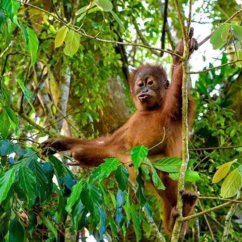 Hoogtepunten van Sumatra, Java & Bali