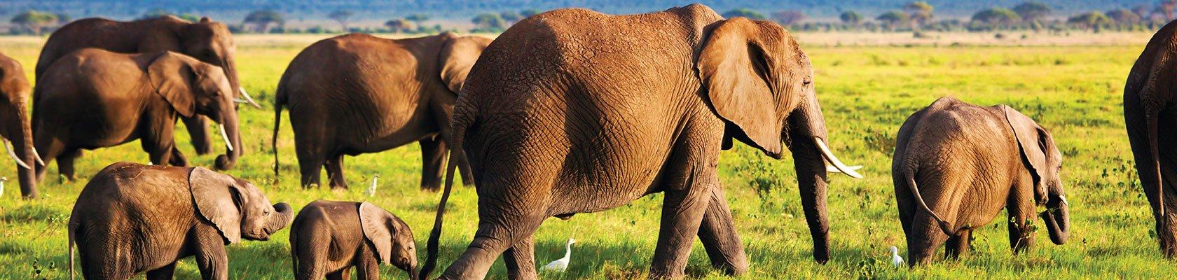 Natuurreizen Afrika
