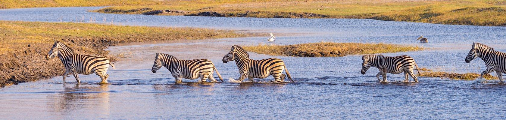 Krugerpark - Zuid-Afrika