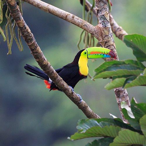 NRV: Costa Rica Compleet per 4WD